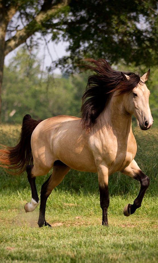 اجمل الصور حصان في العالم صور خيول جميلة وخلفيات روعة