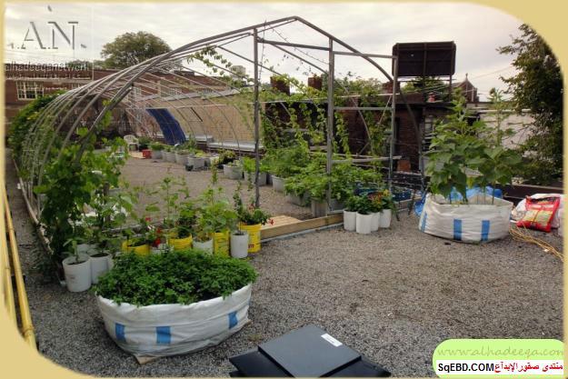 زراعة الاسطح المنزلية بالصور,.زراعة الاسطح, زراعة الخضروات في حديقة المنزل do.php?img=7628