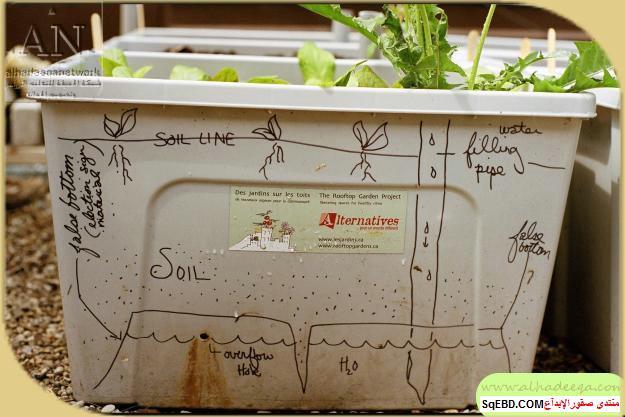زراعة الاسطح المنزلية بالصور,.زراعة الاسطح, زراعة الخضروات في حديقة المنزل do.php?img=7629
