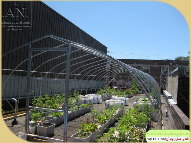 زراعة الاسطح المنزلية بالصور,.زراعة الاسطح, زراعة الخضروات في حديقة المنزل do.php?img=7632