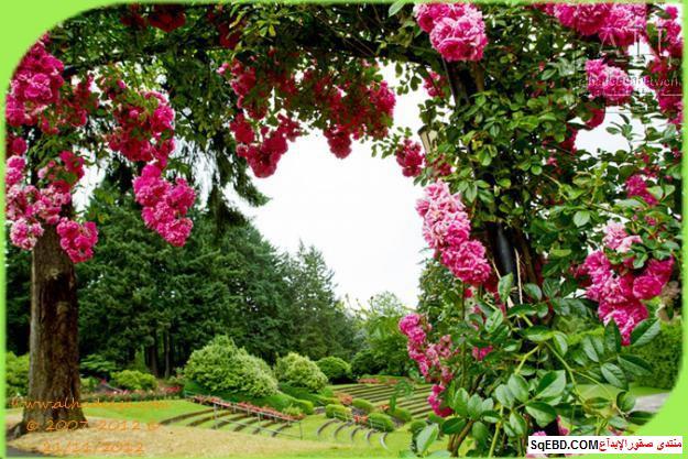بالصور اجمل ورود الصباح, الحديقة الدولية , حديقة الزهور في بورتلاند do.php?img=7697