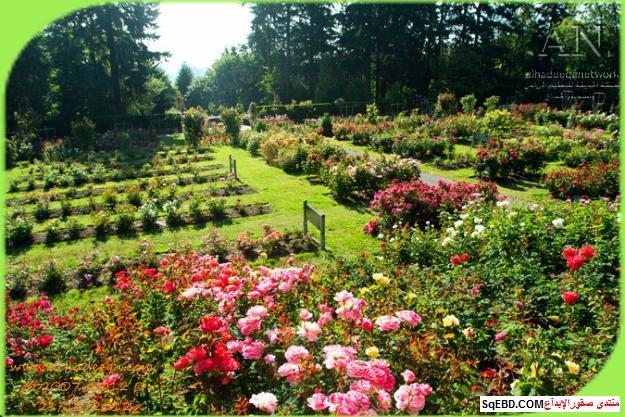 بالصور اجمل ورود الصباح, الحديقة الدولية , حديقة الزهور في بورتلاند do.php?img=7699
