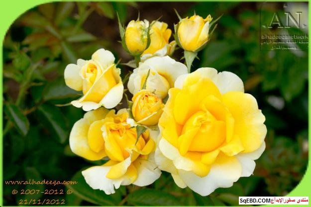 بالصور اجمل ورود الصباح, الحديقة الدولية , حديقة الزهور في بورتلاند do.php?img=7700