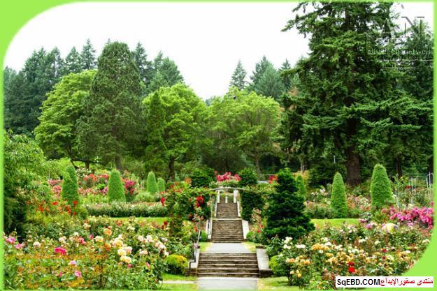 بالصور اجمل ورود الصباح, الحديقة الدولية , حديقة الزهور في بورتلاند do.php?img=7701