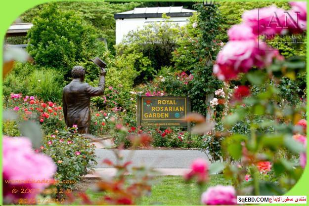 بالصور اجمل ورود الصباح, الحديقة الدولية , حديقة الزهور في بورتلاند do.php?img=7702
