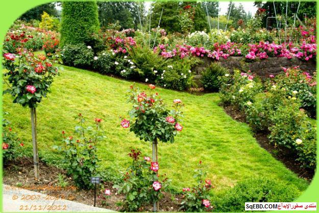 بالصور اجمل ورود الصباح, الحديقة الدولية , حديقة الزهور في بورتلاند do.php?img=7706