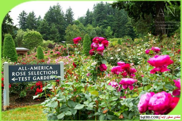 بالصور اجمل ورود الصباح, الحديقة الدولية , حديقة الزهور في بورتلاند do.php?img=7708