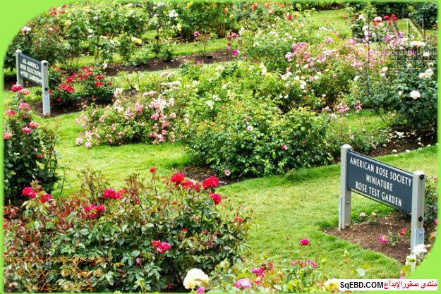 بالصور اجمل ورود الصباح, الحديقة الدولية , حديقة الزهور في بورتلاند do.php?img=7714