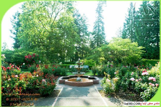 بالصور اجمل ورود الصباح, الحديقة الدولية , حديقة الزهور في بورتلاند do.php?img=7716