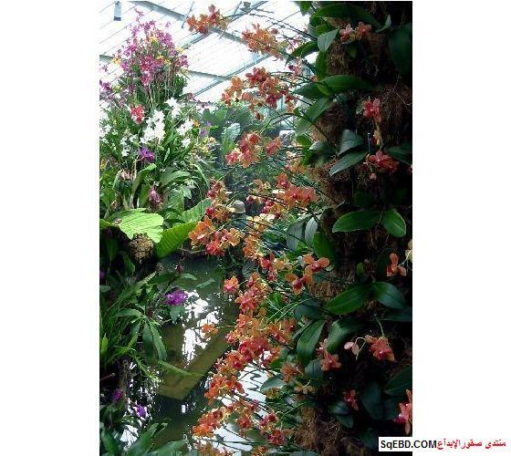 حدائق كيو جاردن لندن , كيو جاردن ,  kew gardens london, do.php?img=7721