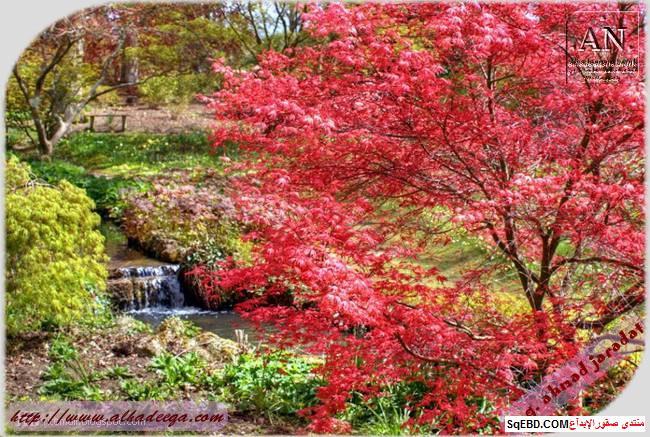 اجمل الحدائق في العالم, عالم الطبيعة والجمال, اهم الحدائق الطبيعية do.php?img=7754