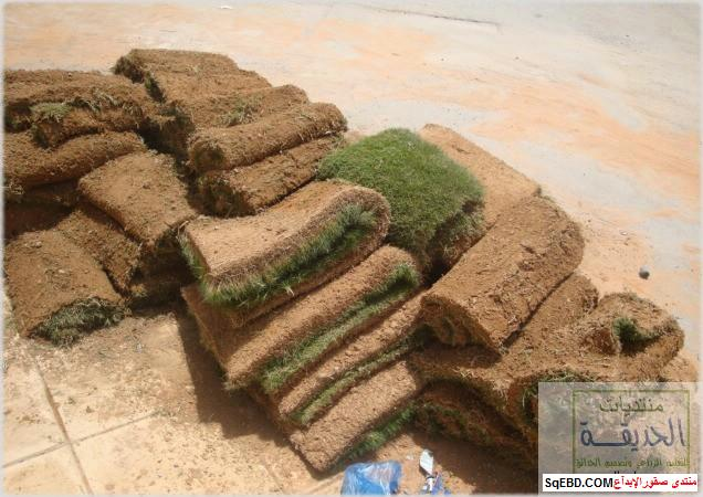 حدائق منزلية بسيطة , احواض زراعية منزلية , تبليط الحوش do.php?img=7790