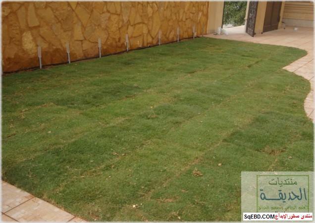 حدائق منزلية بسيطة , احواض زراعية منزلية , تبليط الحوش do.php?img=7795
