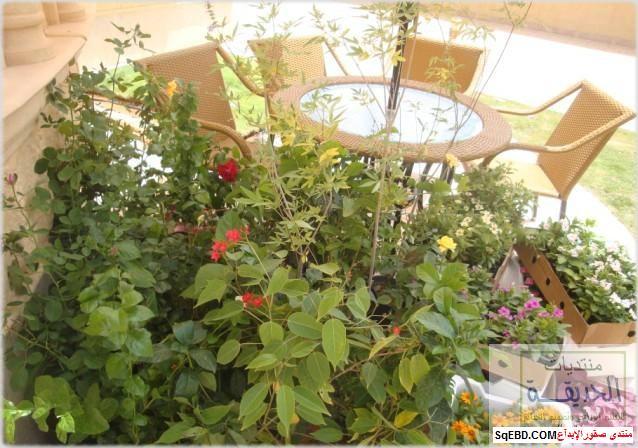 حدائق منزلية بسيطة , احواض زراعية منزلية , تبليط الحوش do.php?img=7797