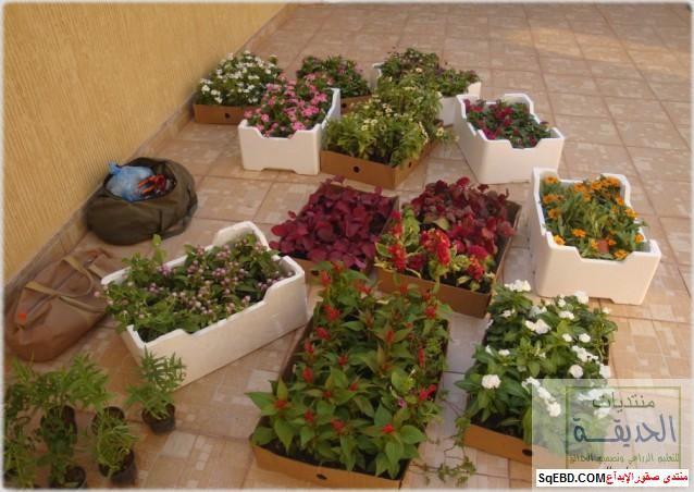 حدائق منزلية بسيطة , احواض زراعية منزلية , تبليط الحوش do.php?img=7798