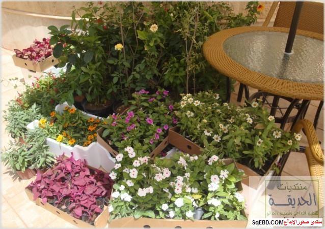 حدائق منزلية بسيطة , احواض زراعية منزلية , تبليط الحوش do.php?img=7799
