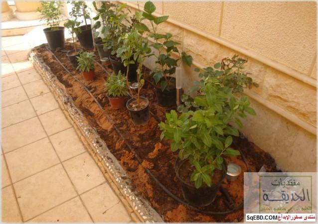 حدائق منزلية بسيطة , احواض زراعية منزلية , تبليط الحوش do.php?img=7800