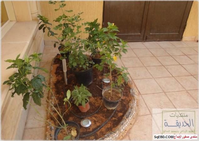 حدائق منزلية بسيطة , احواض زراعية منزلية , تبليط الحوش do.php?img=7801
