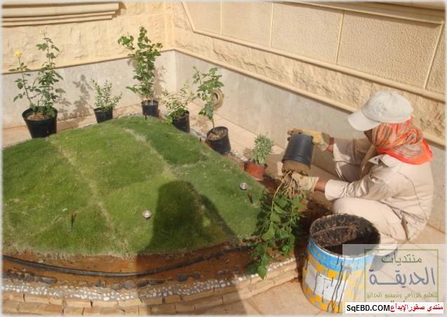 حدائق منزلية بسيطة , احواض زراعية منزلية , تبليط الحوش do.php?img=7802