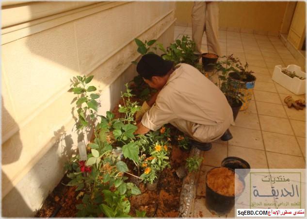 حدائق منزلية بسيطة , احواض زراعية منزلية , تبليط الحوش do.php?img=7803