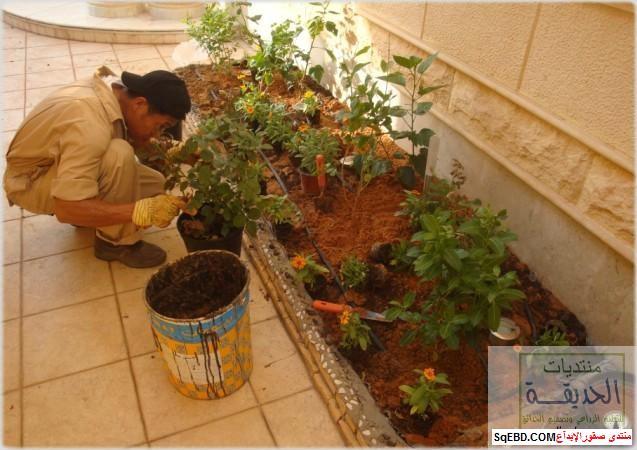 حدائق منزلية بسيطة , احواض زراعية منزلية , تبليط الحوش do.php?img=7804