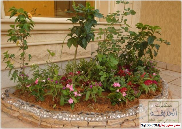 حدائق منزلية بسيطة , احواض زراعية منزلية , تبليط الحوش do.php?img=7806