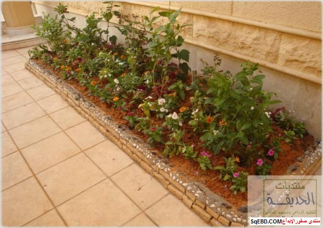 حدائق منزلية بسيطة , احواض زراعية منزلية , تبليط الحوش do.php?img=7808