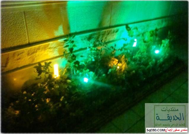 حدائق منزلية بسيطة , احواض زراعية منزلية , تبليط الحوش do.php?img=7813