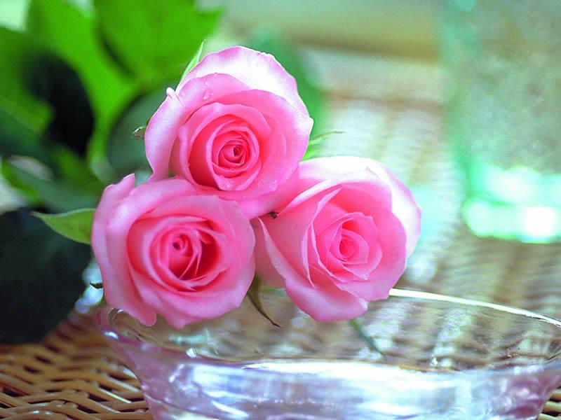 5ef3b8005 قصائد عنن الزهور , اقوال قيلت بالازهار , كلام عن الورد , شعر عن ...